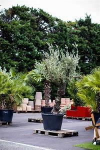 Plantes D U0026 39 Ext U00e9rieur