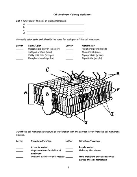 cell membrane worksheet search interactive