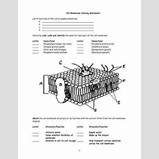 Cell Membrane Worksheet  Google Search  Interactive Notebooks  Pinterest  Cell Membrane And