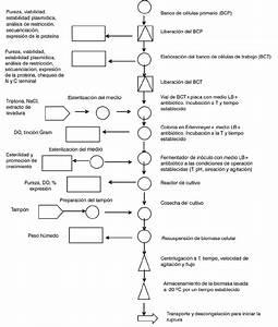 Diagrama De Flujo General De Un Proceso De Fermentaci U00f3n De