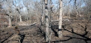 wildland fire fire stories   national park service