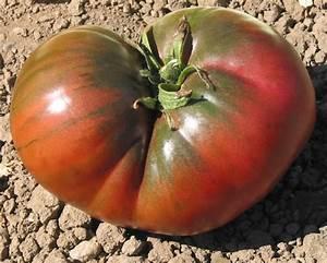 Black-Heirloom Tomato Seeds-Organic Black Tomato Seeds
