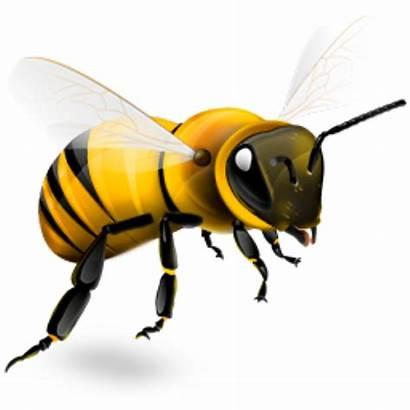 Social Marketing Bee Brand Digital Benefits Awareness