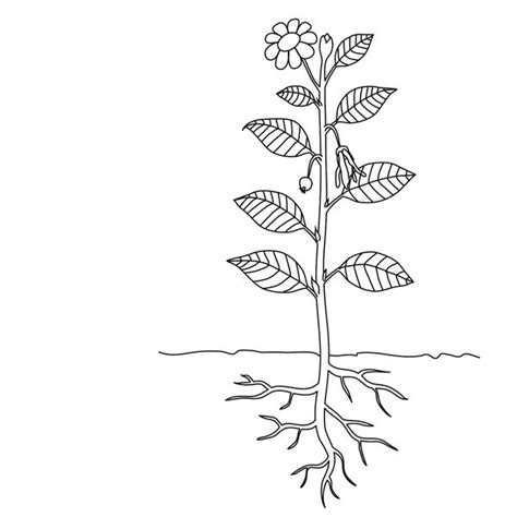images  leaf labeling worksheet dichotomous
