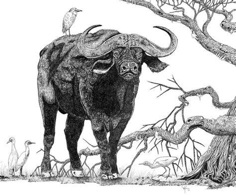 king   cape buffalo canvas print canvas art  doug