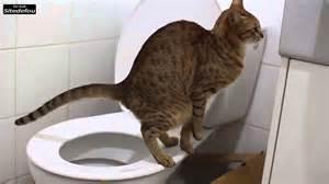 un chat propre qui fait caca dans les wc