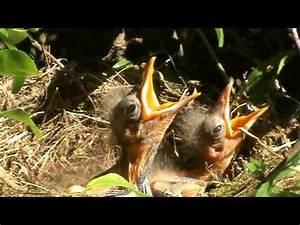 Dans Nos Coeurs Albi 81 : 96 la faune dans les haies de nos jardins jardinier ~ Dailycaller-alerts.com Idées de Décoration
