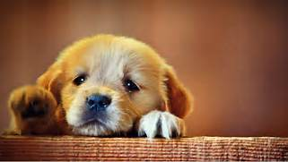 This is for all the mo...Sad Puppy