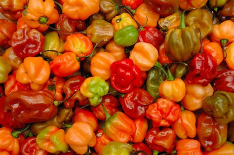 scotch bonnet nt what is the spiciest thing you have ever eaten in general talk forum