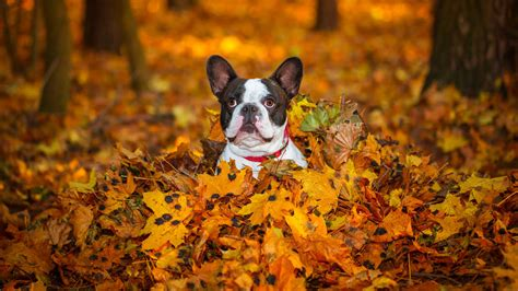 Fall Backgrounds Dogs by Puppies Enjoy Fall Southern Living