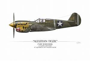 Aleutian Tiger P-40 Warhawk - White Background Painting by