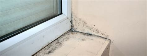 Caulking Window Sills by How To Prevent Mold Growth On Windowsills Tcb Envirocorp