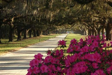 boone hall plantation charleston attractions review
