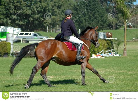 riding horse sport rider horses caucasian ponytail outdoors male brown dreamstime
