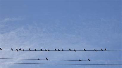 Wire Birds Background