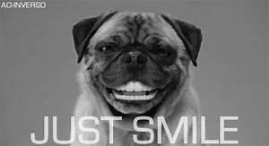 Dog Smile GIF - Find & Share on GIPHY