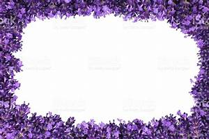 Lavender Flower Border Isolated stock photo 482763593 | iStock