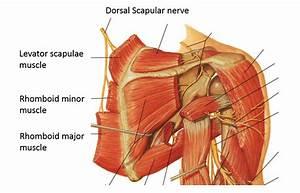 Scapular Winging | Winged Scapula | Colorado Shoulder Surgeon