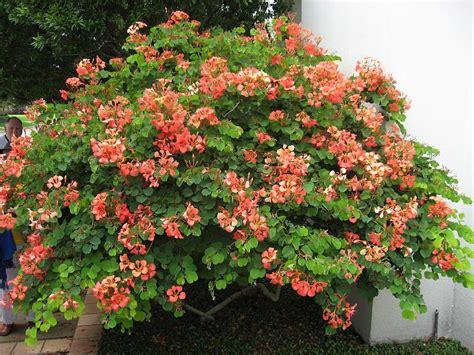 houston garden center return to abs greenhouse convention 2008 in