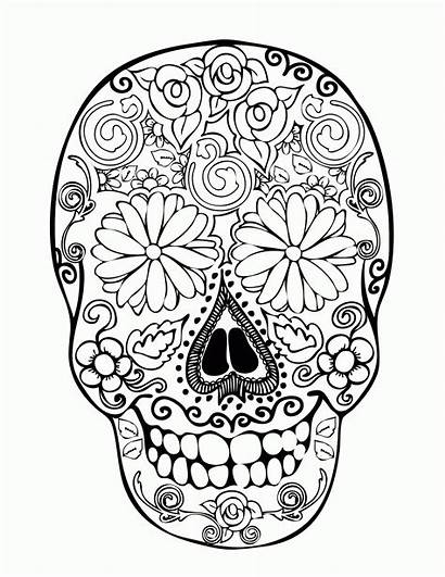 Coloring Skull Sugar Easy Adults Pdf Popular