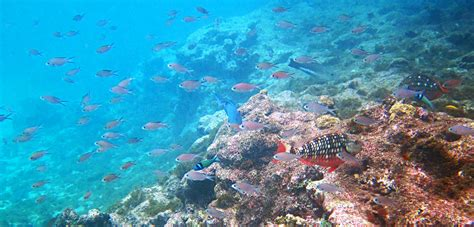 curacao snorkeling pictures