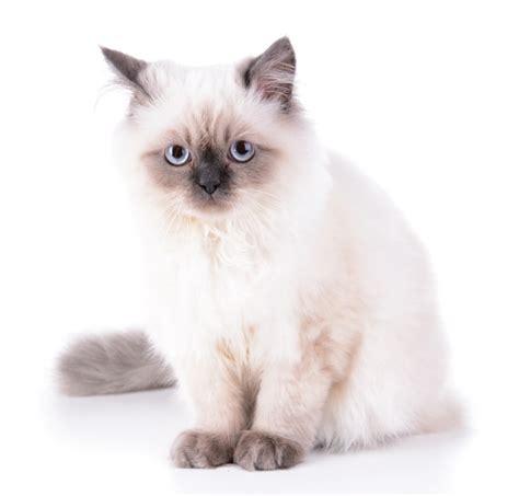 white cat names cute names for white kittens cats kittens