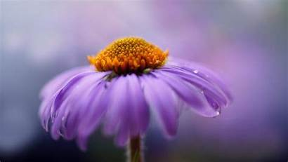 4k Resolution Ultra Purple Flower Flowers Wallpapers