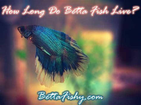 how do beta fish live 17 best images about betta fish pics on pinterest aquarium driftwood betta fish tank and live