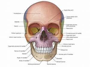 Easy Notes On 【Norma Frontalis】Learn in Just 4 Minutes!