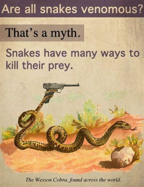 Snake Memes - 24 best snek images on pinterest hilarious animals animal pics and cute snake