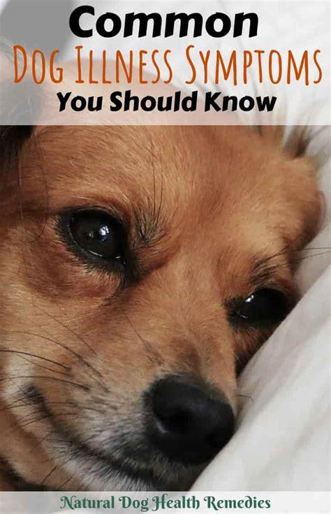 dog illness symptoms common canine illnesses