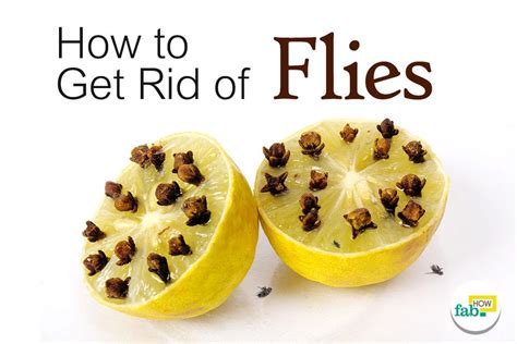 how to get rid of flies outside on patio how to get rid of flies quickly inside and outside fab how