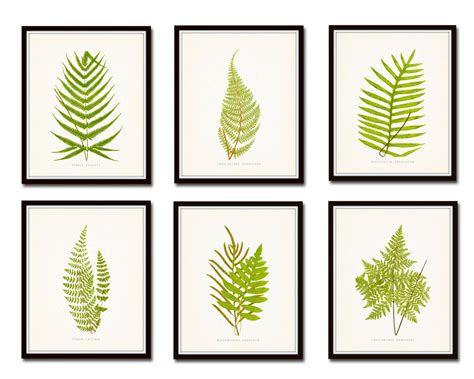 Vintage Ferns Print Set No 1 Botanical Prints Giclee Art