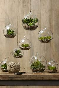 Sukkulenten Zimmerpflanzen Glas Terrarium Deko