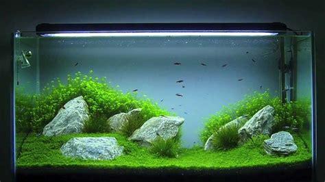 aquascaping aquario plantado  litros hd youtube