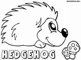 Hedgehog Coloring Pages Colorings sketch template
