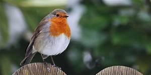 Singvögel Im Garten : vogelbeobachtung im garten ~ Whattoseeinmadrid.com Haus und Dekorationen