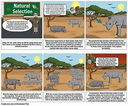 Selection Natural Storyboard Storyboardthat
