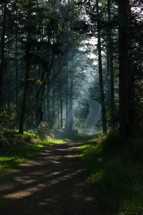 nature trees portrait display path forest sunlight