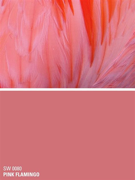 what color is a flamingo sherwin williams paint color pink flamingo sw 0080