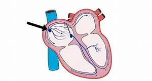 Heartbeat  U0026 Cardiac Conduction System