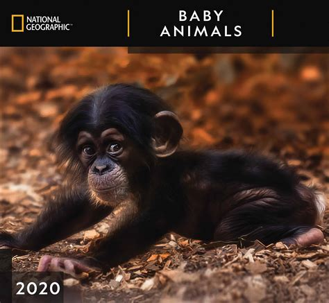 national geographic baby animals deluxe calendar