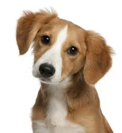 dog pictures search
