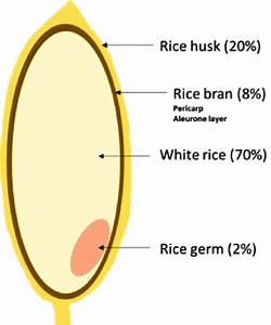 1 The Structure Of A Rice Grain