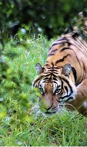 Jukani Wildlife Sanctuary, Plettenberg Bay, South Africa