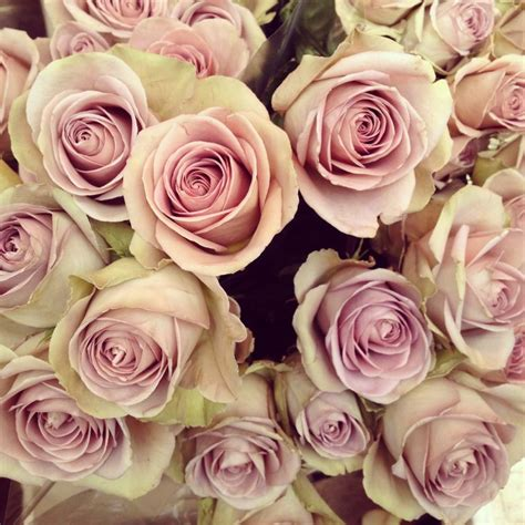 favourite dusky pink roses  colombia flower market