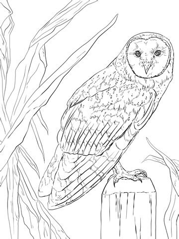 barn owl coloring page  printable coloring pages