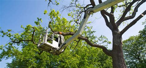 Tree Service Jacksonville Florida. Engineering Colleges In Tennessee. Clinical Laboratory Technician Programs. Osha 30 Hr Training Online Main Drain Clogged. How To Make Sure You Get Pregnant. Civil Litigation Lawyers Cable In Columbia Sc. Cosmetology School Knoxville Tn. Bachelor Degree In Education Requirements. Bush School Of International Affairs