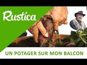 Culture De La Patate Douce : la culture de la patate douce en pot youtube ~ Carolinahurricanesstore.com Idées de Décoration