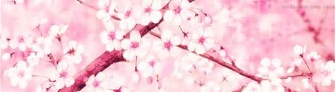 gif tree anime beautiful cherry blossom anime gif